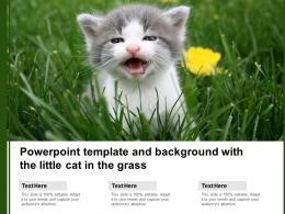 Powerpoint Template And Background With The Little Cat In The Grass