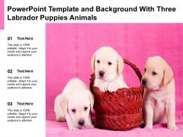 Powerpoint Template And Background With Three Labrador Puppies Animals