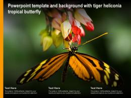 Powerpoint Template And Background With Tiger Heliconia Tropical Butterfly