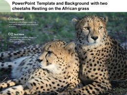 Powerpoint Template And Background With Two Cheetahs Resting On The African Grass