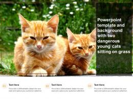 Powerpoint Template And Background With Two Dangerous Young Cats Sitting On Grass