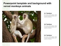 Powerpoint Template And Background With Vervet Monkeys Animals