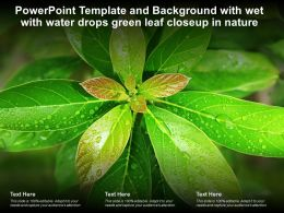 Powerpoint Template And Background With Wet With Water Drops Green Leaf Closeup In Nature
