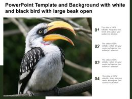 Powerpoint Template And Background With White And Black Bird With Large Beak Open