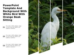 Powerpoint Template And Background With White Bird With Orange Beak Sitting