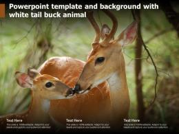 Powerpoint Template And Background With White Tail Buck Animal