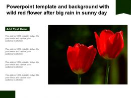Powerpoint Template And Background With Wild Red Flower After Big Rain In Sunny Day