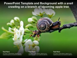 Powerpoint Template Background With A Snail Crawling On A Branch Of Blooming Apple Tree