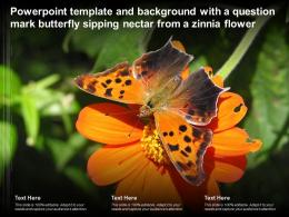 Powerpoint Template With A Question Mark Butterfly Sipping Nectar From A Zinnia Flower