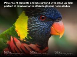 Powerpoint Template With Close Up Bird Portrait Of Rainbow Lorikeet Trichoglossus Haematodus