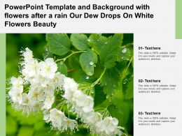 Powerpoint Template With Flowers After A Rain Our Dew Drops On White Flowers Beauty