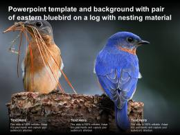 Powerpoint Template With Pair Of Eastern Bluebird On A Log With Nesting Material