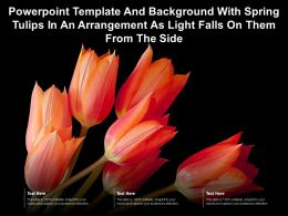 Powerpoint Template With Spring Tulips In An Arrangement As Light Falls On Them From The Side