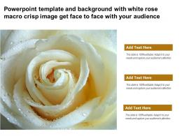 Powerpoint Template With White Rose Macro Crisp Image Get Face To Face With Your Audience