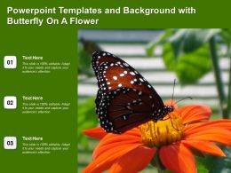 Powerpoint Templates And Background With Butterfly On A Flower