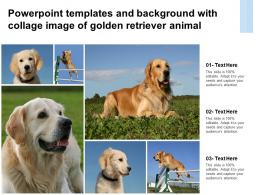 Powerpoint Templates And Background With Collage Image Of Golden Retriever Animal