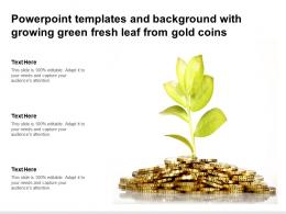 Powerpoint Templates And Background With Growing Green Fresh Leaf From Gold Coins