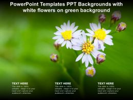 Powerpoint Templates Ppt Backgrounds With White Flowers On Green Background
