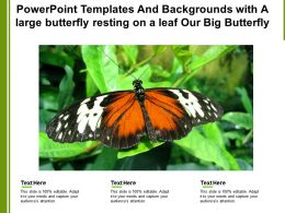 Powerpoint Templates With A Large Butterfly Resting On A Leaf Our Big Butterfly