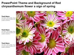 Powerpoint Theme And Background Of Red Chrysanthemum Flower A Sign Of Spring