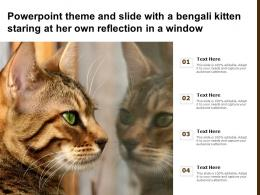 Powerpoint Theme And Slide With A Bengali Kitten Staring At Her Own Reflection In A Window