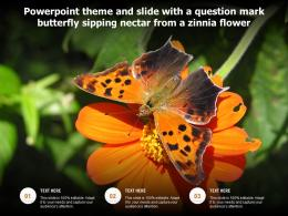 Powerpoint Theme And Slide With A Question Mark Butterfly Sipping Nectar From A Zinnia Flower