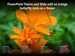Powerpoint Theme And Slide With An Orange Butterfly Rests On A Flower