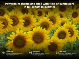 Powerpoint Theme And Slide With Field Of Sunflowers In Full Bloom In Summer