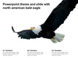 Powerpoint Theme And Slide With North American Bald Eagle
