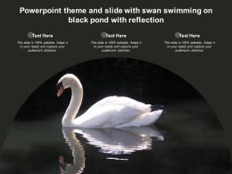Powerpoint Theme And Slide With Swan Swimming On Black Pond With Reflection
