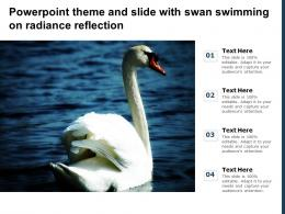 Powerpoint Theme And Slide With Swan Swimming On Radiance Reflection
