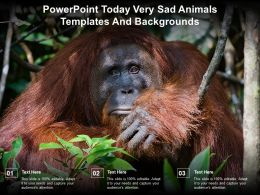 Powerpoint Today Very Sad Animals Templates And Backgrounds