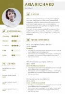 Professional Resume Summary Example Format