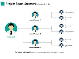 Project Team Structure Ppt Examples Slides