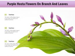 Purple Hosta Flowers On Branch And Leaves