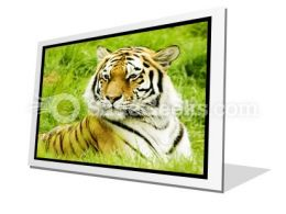 Amur Tiger PowerPoint Icon F