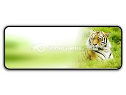 Amur Tiger PowerPoint Icon R