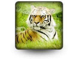 Amur Tiger PowerPoint Icon S