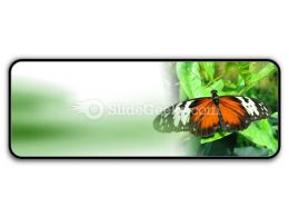 Big Butterfly PowerPoint Icon R