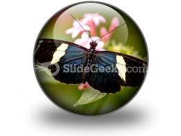 Butterfly Icon C