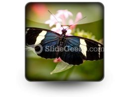 Butterfly Icon S