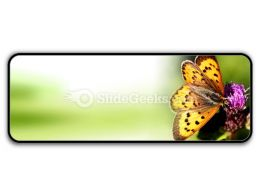 Butterfly PowerPoint Icon R