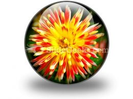 Dahlia Beauty PowerPoint Icon C