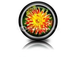Dahlia Beauty PowerPoint Icon Cc