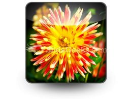 Dahlia Beauty PowerPoint Icon S