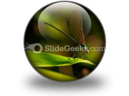 Insect PowerPoint Icon C