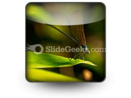 Insect PowerPoint Icon S