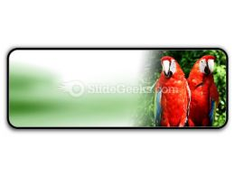 Red Parrots PowerPoint Icon R