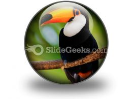 Toucan PowerPoint Icon C