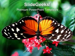 Amazing Close Up Butterfly Animals PowerPoint Templates And PowerPoint Backgrounds 0111